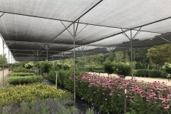 In Stock Perennials for Contractor Convenience